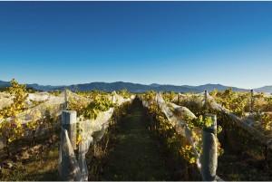 Folium Vineyard Marlborough New Zealand