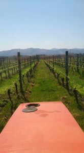 View from Tractor
